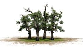 Honey Trees sur un vert, erea de sable Image libre de droits