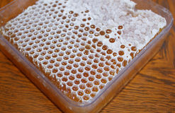 Honey in white honeycomb Royalty Free Stock Image