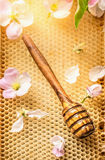 Honey wooden Dipper on honeycomb with fresh blooming, top view Royalty Free Stock Images