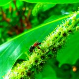 honeybee Royaltyfri Foto