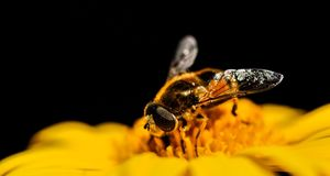 honeybee stockbilder