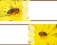 Honeybee banners Stock Photo