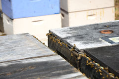 Honeybee Hives. Honeybees fly from a bee hive in an orange grove stock photo