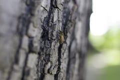 Honeybee 2 i drzewo Zdjęcie Stock