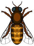 Honeybee. Illustration of the honeybee insect icon Royalty Free Stock Images