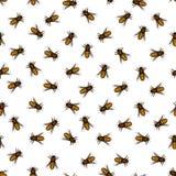 Honeybee pattern Stock Image