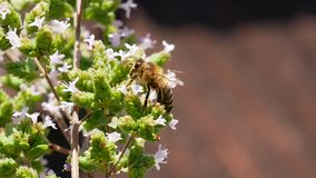Flowering plant in spring with bee stock photos