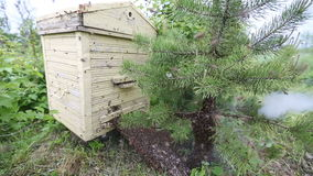 Honeybee swarm stock video