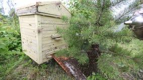 Honeybee swarm stock footage