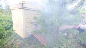 Honeybee swarm stock video footage