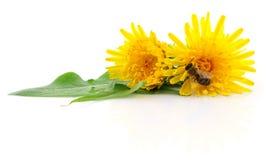 Honeybee and yellow flower Stock Images