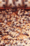 Honeybees on a Comb Royalty Free Stock Image