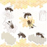 Honeybees on a comb Stock Photos