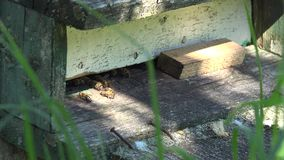 Honeybees fly into wooden beehive entrance in green garden. 4K stock video