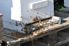 Honeybees in Hive Royalty Free Stock Photos