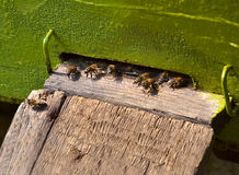 Honeybees in hives 2 Stock Photography