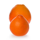 Honeybell Oranges Royalty Free Stock Image