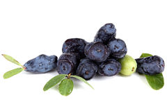 Honeyberry Stock Photos