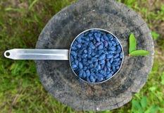Honeyberry in oude gietlepel op stomp in de tuin Royalty-vrije Stock Foto