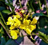 Honeybuns και λουλούδι στοκ εικόνες με δικαίωμα ελεύθερης χρήσης