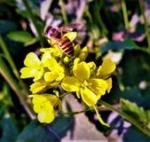 Honeybuns och blomma royaltyfria bilder