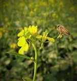 Honeybuns y flor fotos de archivo