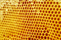 Honeycall Stock Photo