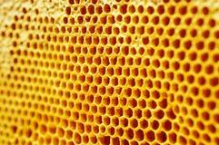 Free Honeycall Stock Photo - 5938350