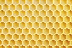 Honeycells Lizenzfreie Stockfotografie