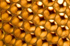 Honeycomb 005 Royalty Free Stock Images