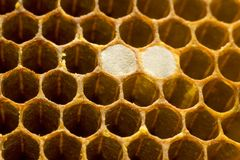 Honeycomb 006 Stock Photography