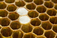 Honeycomb 008 Stock Photos