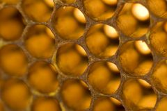 Honeycomb 010 Stock Images