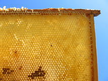 Honeycomb. With a wooden frame on the blue sky Royalty Free Stock Photos