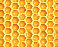 Honeycomb. Additional  format Illustrator 8 eps Stock Photos