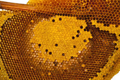 Honeycomb. Bee in  the beehive cells Royalty Free Stock Photo