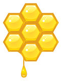 Honeycomb. Honey comb and honey dripping Royalty Free Stock Photo