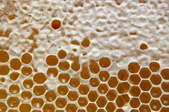 Free Honeycomb Royalty Free Stock Photo - 14795345