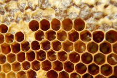 Free Honeycomb Royalty Free Stock Images - 15100729