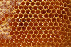 Free Honeycomb Stock Photos - 16763833