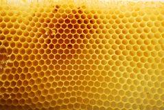 honeycomb Fotografia Stock