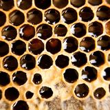 Honeycomb. Fresh honey in the comb Stock Photography