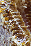 Honeycomb. A piece of  honey comb Royalty Free Stock Photos