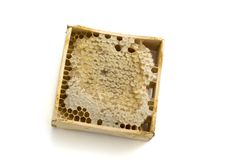 honeycomb Obrazy Royalty Free