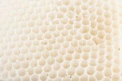 Honeycomb. Nice white background of honeycomb Stock Photo