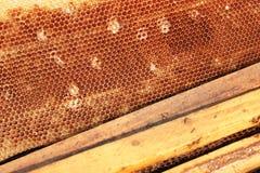 Honeycomb Stock Photos