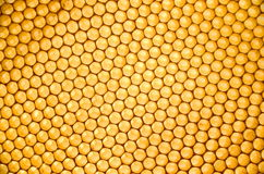 Free Honeycomb Royalty Free Stock Photography - 30740367