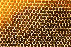 Free Honeycomb Stock Images - 31069524