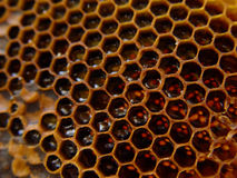 honeycomb Fotografia Stock