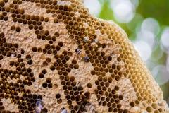 Honeycomb Obraz Royalty Free